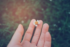 Hand holding small flower