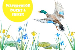 Watercolor ducks&irises (png+vector)