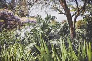 iseeyouphoto-spring garden