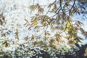 iseeyouphoto spring tree