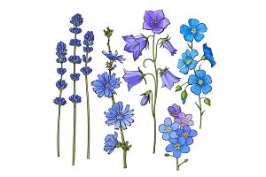 Hand drawn blue flowers - lavender, forget me not, bell, cornflowers
