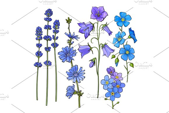 Hand Drawn Blue Flowers Lavender Forget Me Not Bell Cornflowers