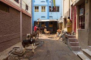 Day in Madurai, India (14 photos)