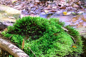Moss on stone in tropical forest