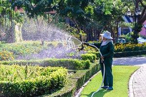 Gardener watering for plant.