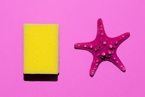 Starfish and sponge. Minimal