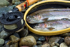Fly Reel next to Catch in net