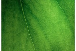 Macro photo of green leaf. Concept nature and ecology.