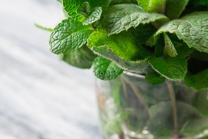 Fresh mint leaves herb