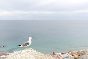 Seagull in the castle