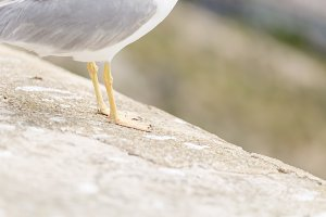 Close-ups of the legs of a Seagull