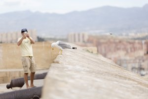 Man photographing a Seagull