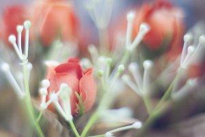 Bokeh red roses