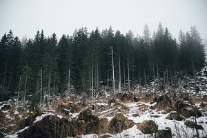 Mystic Forest in vsco hipster style
