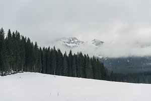 Misty Mountains and forest in winter