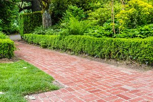 Green hedge with brick path