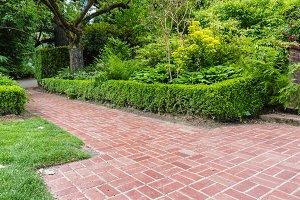 Hedge bording a brick path