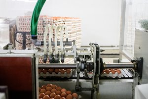 Machinery and equipment for production of eggs