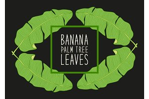 Beautiful green botanical frame with foliage as banana palm tree leaves