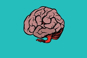 the human brain vector illustration