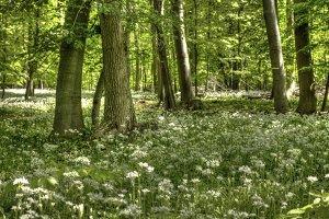 Germany: Spring In Lower Saxony
