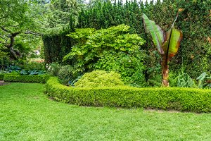 Green lawn with hedge