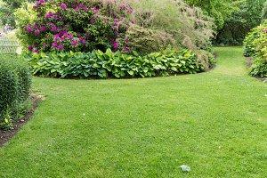 Garden with hosta plants