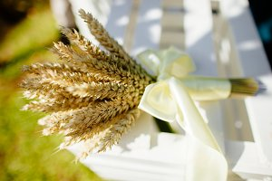 spikelets of wheat close up