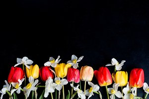 Tulips and daffodils on black