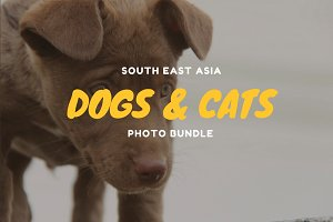 South East Asia Dogs and Cats Bundle