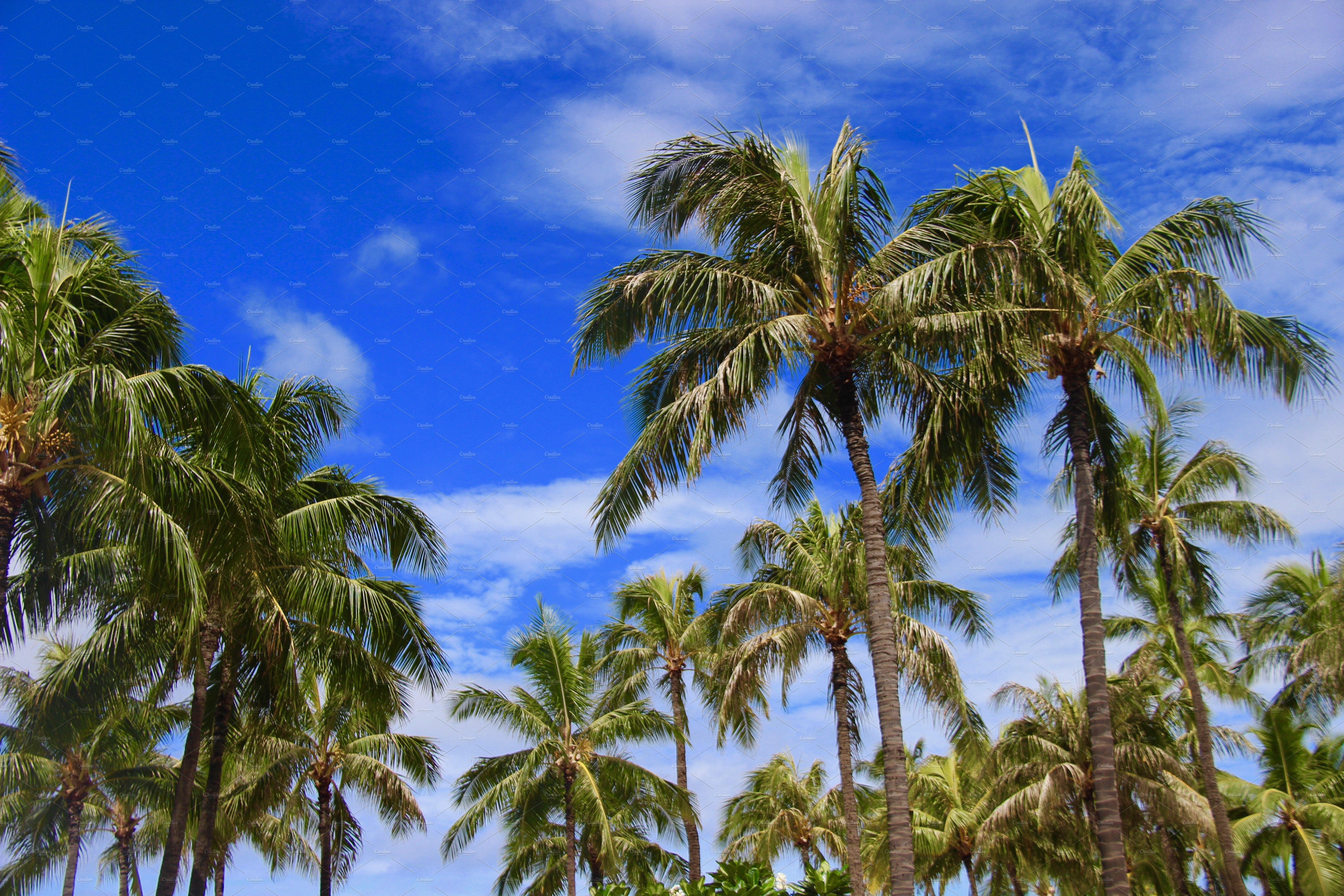 Palm Trees With Blue Sky Hawaii Nature Photos