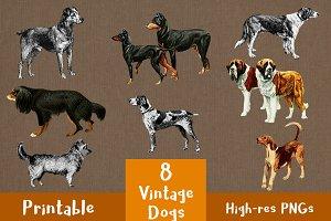 8 Vintage Dogs Clip Art