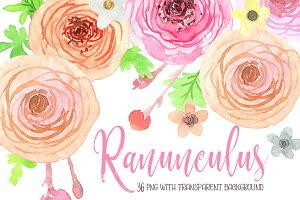 Watercolor ranunculus flowers png