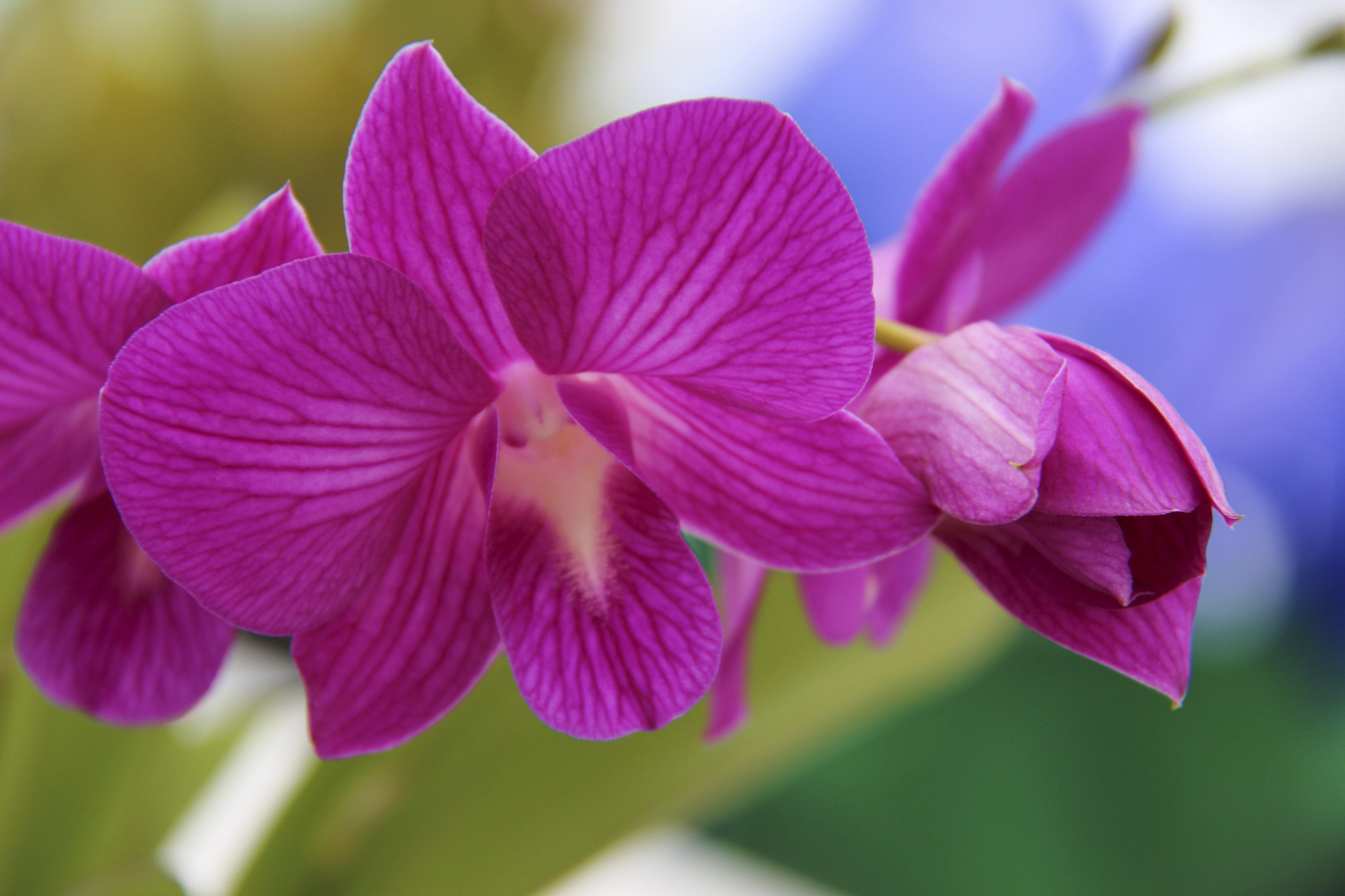 Pink Hawaiian Flower Nature Photos Creative Market