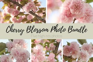 Cherry Blossom Photo Bundle