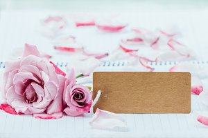 pink rose and cardboard