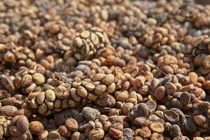 Luwak coffee