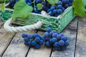 Bunches of blue grape and green grapevine on the wooden tray