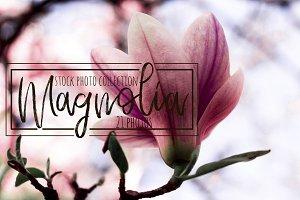 Magnolia stock photo collection