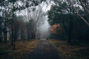 Foggy Autumn Day in Australia