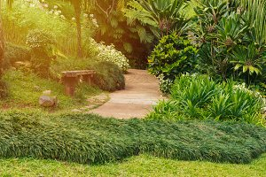 pathway with green grass