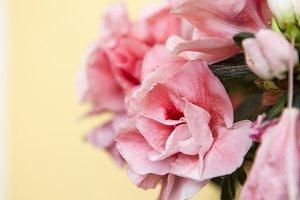 White and pink azaleas