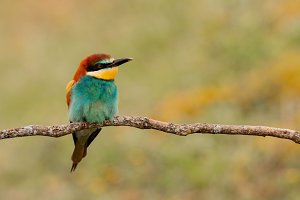 Beautiful colorful bird
