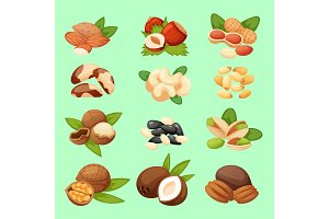 Set of nuts vector illustration food natural