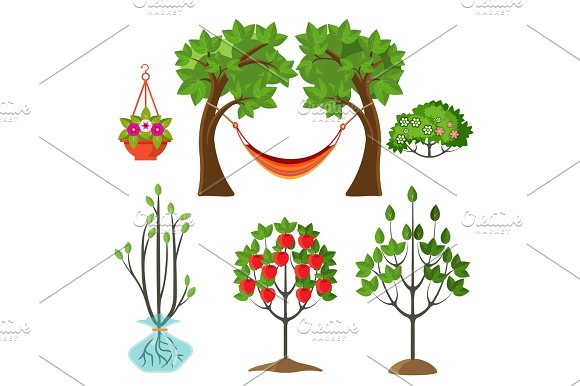 Set Of Summer Plants In Gardening Concept Apple Tree