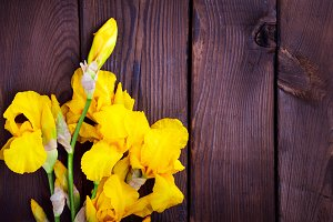 Bouquet of yellow irises