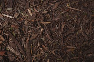 Wooden chips on ground