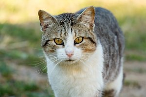 Beautiful wild cat