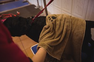 Woman wiping dog with towel