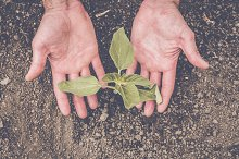 Hands holding a little plant